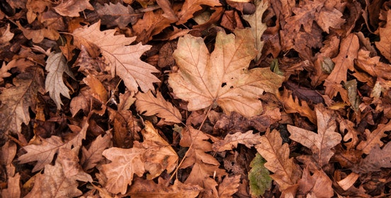 A closeup image of a pile of leaves.