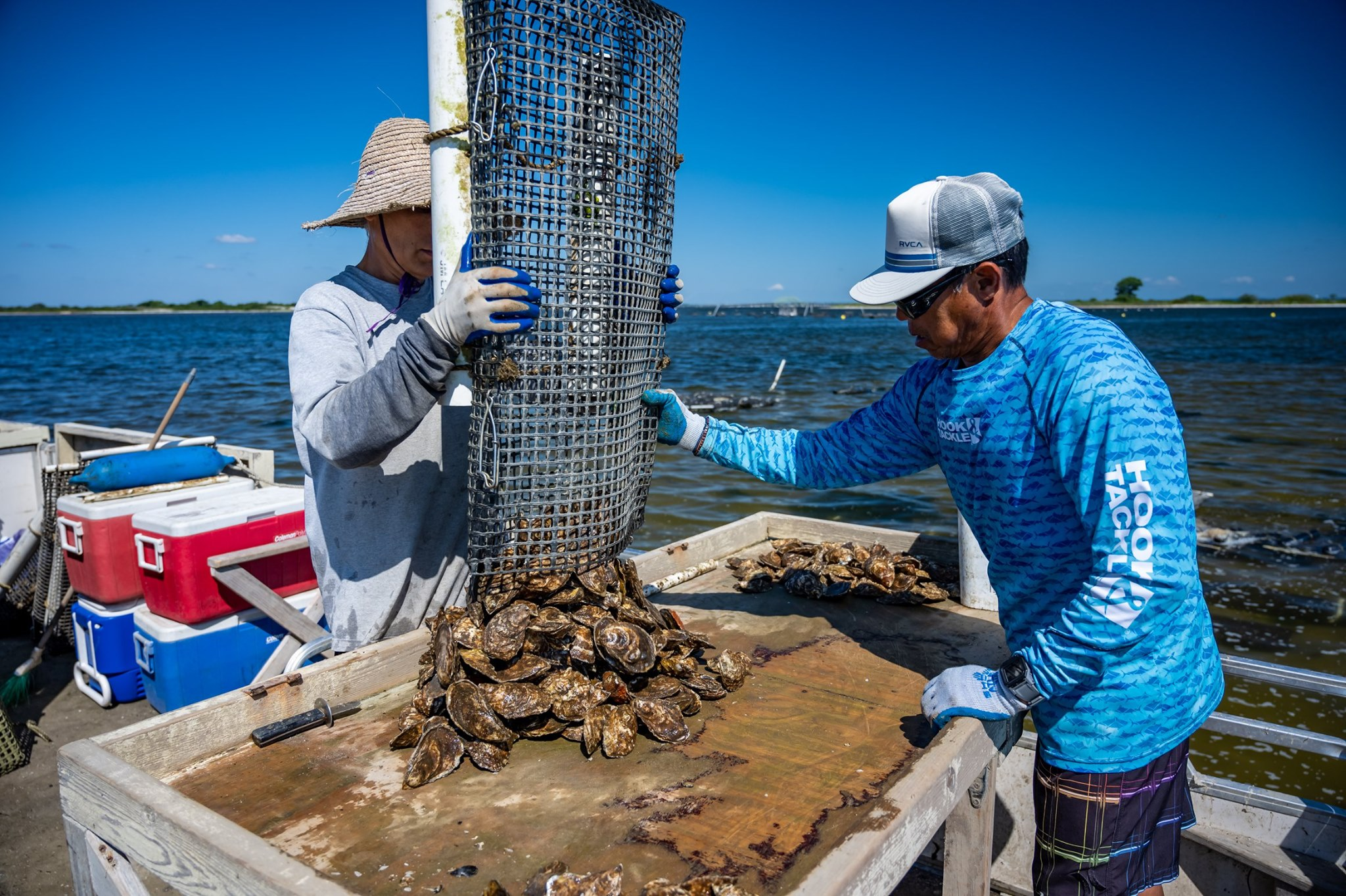 workes separate oysters from net