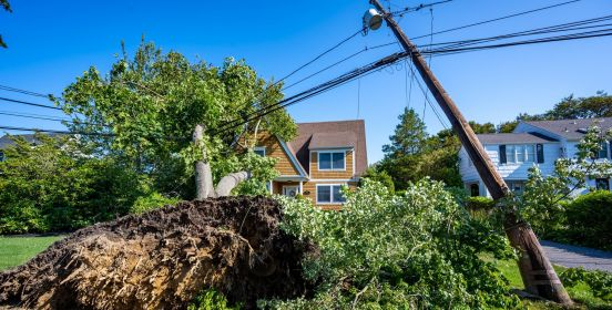 uprooted tree leans on house